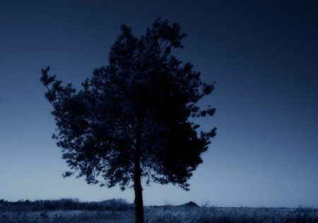 Standing alone tree against the night sky background