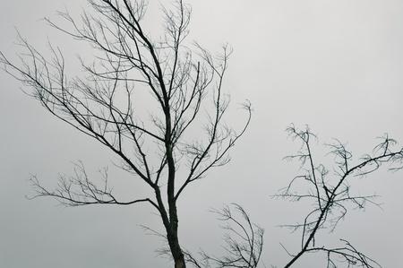 秋の風景: 灰色の空に対して葉のない木 写真素材