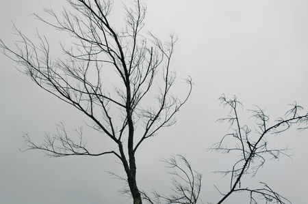 dead trees: Autumn landscape: leafless tree against the gray sky Stock Photo
