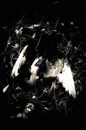 A dead bird photo