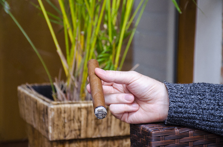 Hand keeps burning cigar with blurred plants in background.