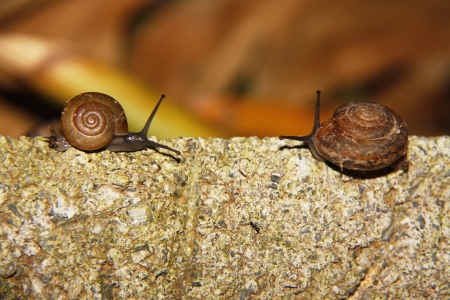 two snail at meets between travel  photo