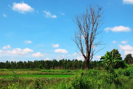 karkas: boom karkas, de locatie naast het veld