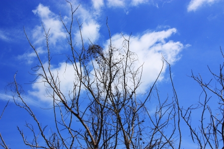 Branches high on sky  Shoot at khao kaew sub- district, chiang Khan, Loei, Thailand photo