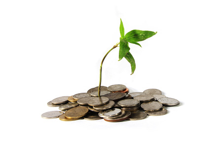 white interest rate: Coins and plant.