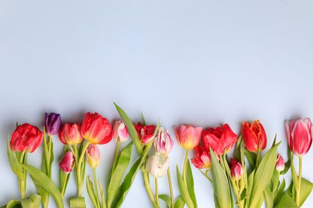 Spring creative background with floral decor