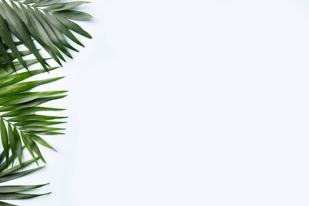 Summer vibes. Vacation, paradise, ocean shore resort, tropical beach travel concept, sea coast. Coconut palm leaves on white background. Summertime creative layout, copy space