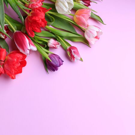 Spring season abstract background. Multicolored tulips frame on pink surface. Mothers day, Women day, seasonal concept. Copy space.