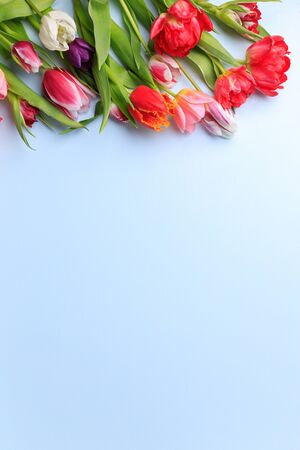 Spring vibes. Border made of tulips on blue background. Seasonal background, Women, Mothers day composition. Flat lay, copy space
