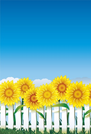 front or back yard: Sunflowers on the white fence Illustration