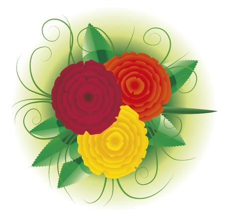 Vector illustration of three roses Illustration