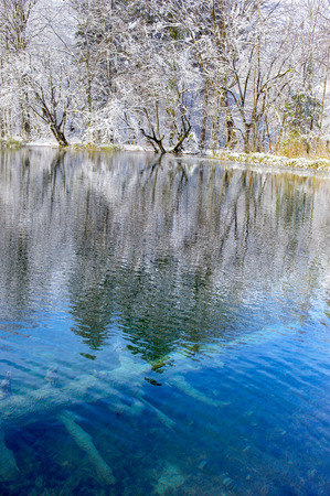 snag: Vivid blue pond amongst snow covered winter trees with submerged snag in it. Stock Photo
