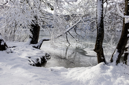 snowcovered: Winter pond behind the snow-covered trees.