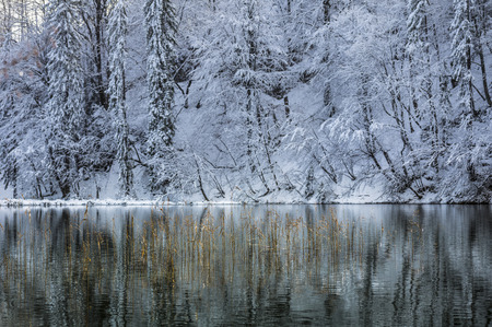 Snow-covered trees reflecting beautifully in unfrozen winter lake. photo