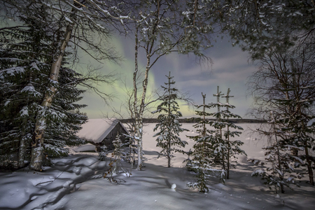 lonliness: Winter forest under the lights of Aurora borealis. Northern Karelia. Russia.
