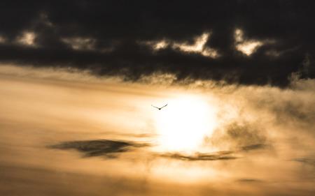 birdwatcher: Eagle in the storm sky.
