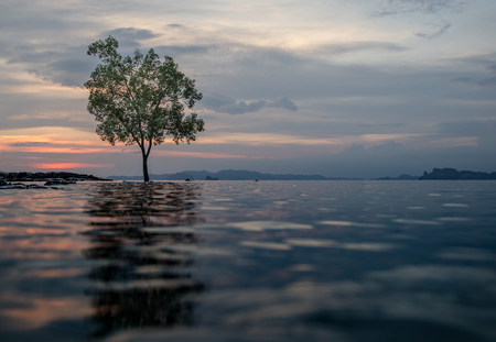 Classic Thailand sunset view withalone tree in the water, ocean, sun and sky