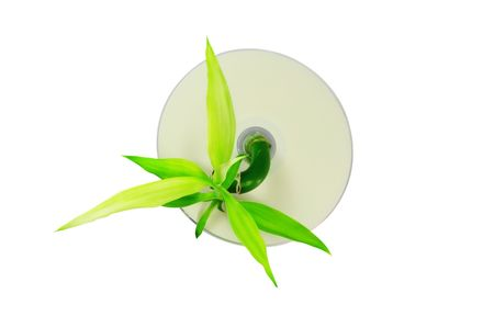 Bamboo sprout growing through CD, isolated on white photo