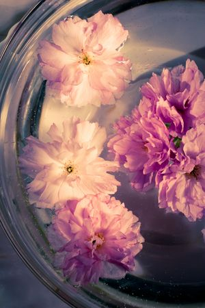 Pink flowers in a glass bowl with water Stock Photo - 5370416