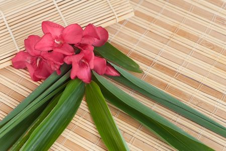 On the vacation: red oleander flowers and bamboo leaves photo