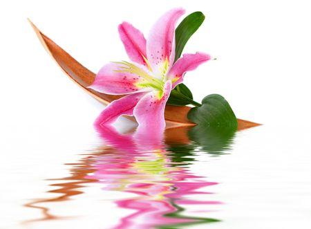 Flor de Lily establecer en una hoja de coco flotando en el agua