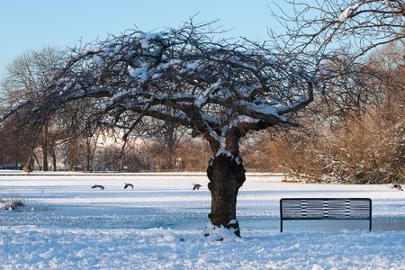 New English winter: Manchester park covered with snow, sunset scene Stock Photo - 6796296