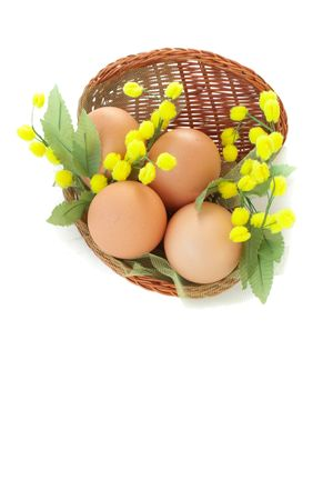 Decorative Easter basket with eggs and mimosa flowers, isolated over white photo
