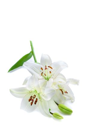 Fresh white lily branch, isolated on white photo