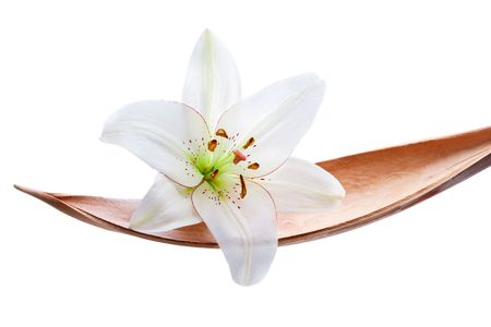Lily flower set on a coco leaf, isolated on white
