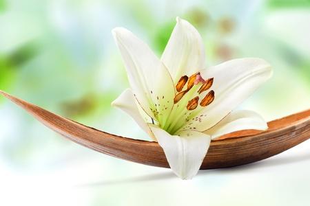olfato: Flor de lirio blanco hermoso en una hoja de Palma de Coco, aislada en blanco Foto de archivo