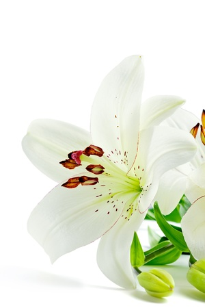Closeup shot  of beautiful white lily flowers, isolated on white photo