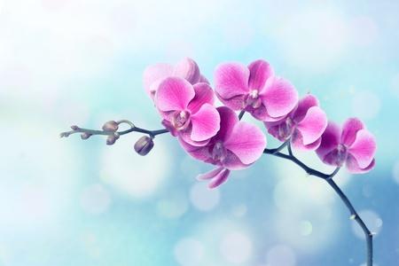 frescura: Flores orquídeas sobre fondo azul borrosa