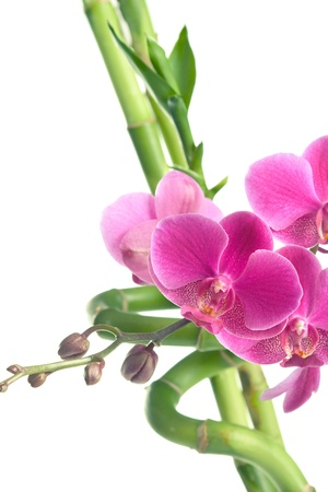 Beautiful purple orchid flowers and bamboo isolated on white Stock Photo
