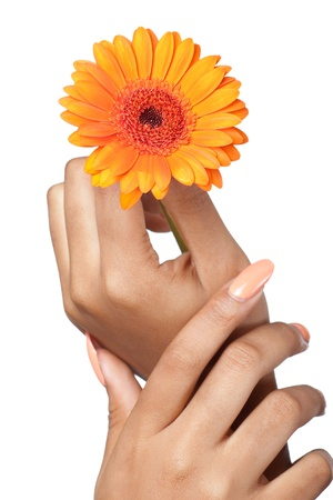 Beautiful woman hands with french manicure holding a flower, closeup shot, isolated on white