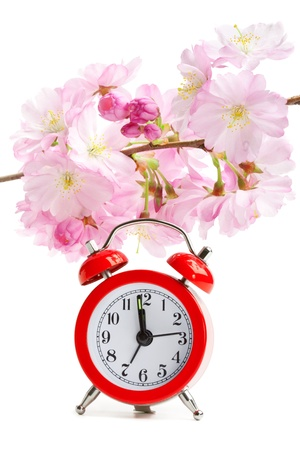 Arrival of spring short life of beauty concept  clock and sakura flowers, isolated on white Stock Photo - 12921596