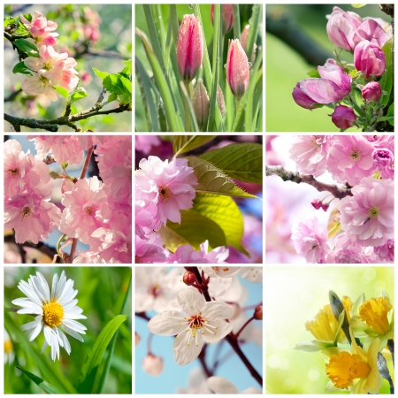Beautiful spring flowers collage, nine photos  Stock Photo