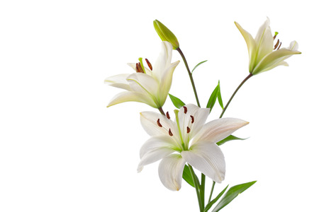 Beautiful white lillies, isolated on white, horizontal studio shot