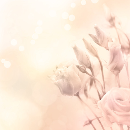 Beautiful flowers in magic light Spring or summer flower background, toned and filtered photo photo