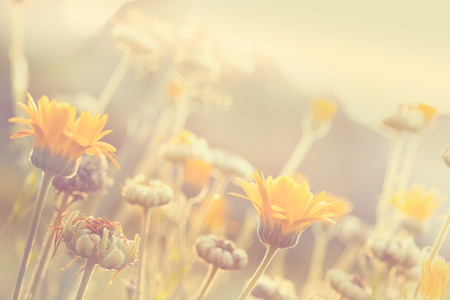 soft colors: Abstract nature blurred background - orange flower on meadow with sun rays, toned photo