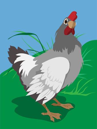 chicken Stock Vector - 7713719