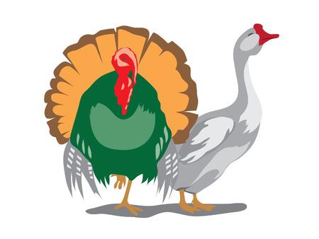 goose and turkey