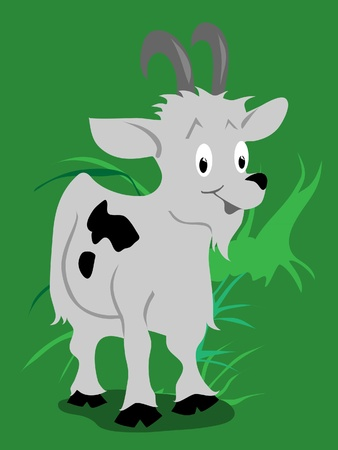 ibex ram: goat