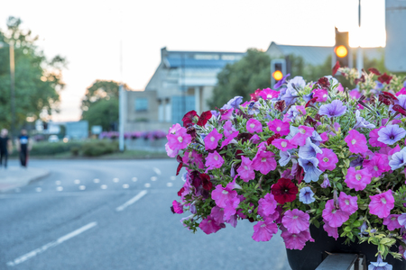 Empty city town road bordered by flowers in summer
