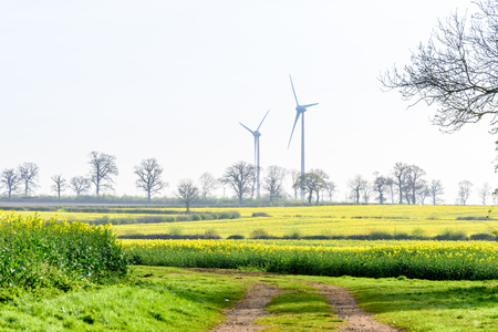 climatic: Wind Turbines in a Canola Rapeseed Field