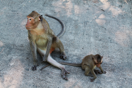 simian: Monkey and baby sitting on the ground