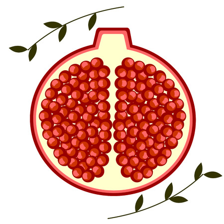 pomegranate: Vector fruits illustration. Detailed icon of cutted pomegranates with leaves, isolated over white background.Series of Fruits and Vegetables. Illustration
