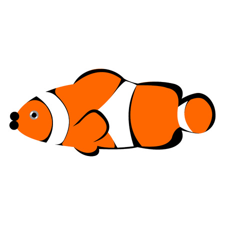 clown fish: Vector illustration of orange striped clown fish, isolated on the white background