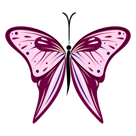 butterfly isolated: Vector illustration of insect, violet and pink butterfly, isolated on the white background