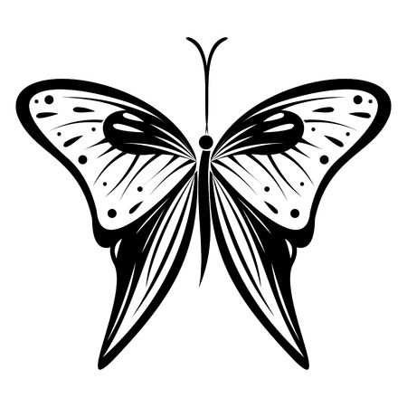butterfly isolated: Vector illustration of insect, black and white butterfly, isolated on the white background