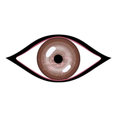 human eye: Vector illustration of human eye. Stylized brown eye with glares Illustration